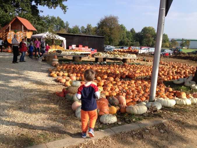 Selecting a pumpkin in Altendorf